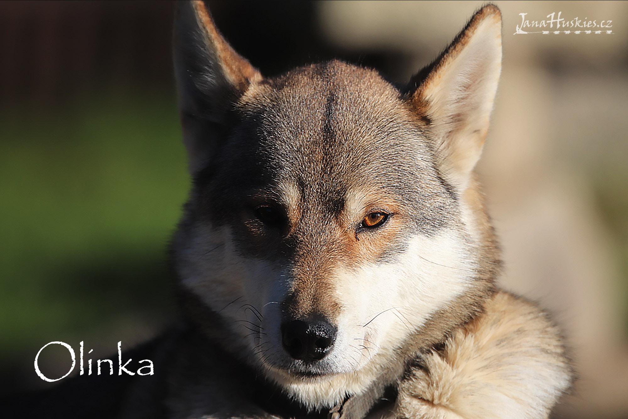 olinka1